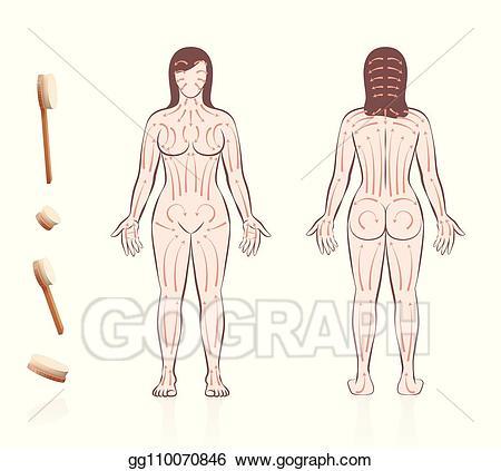 Vector illustration brushing woman. Skin clipart back body