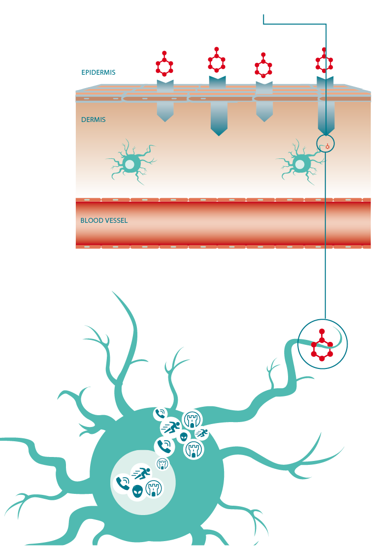 Science behind our products. Skin clipart dermis