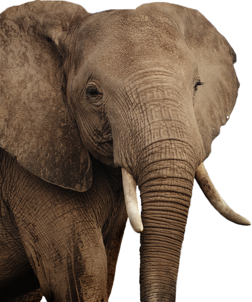 Skin clipart elephant. Png