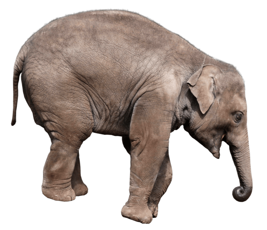 Png free images toppng. Skin clipart elephant