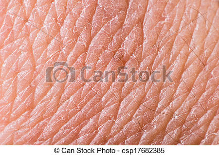 Texture of panda free. Skin clipart human skin