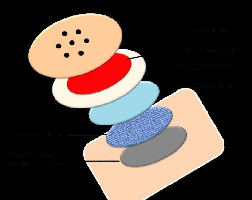 Synera lidocaine tetracaine patch. Skin clipart skin diagram