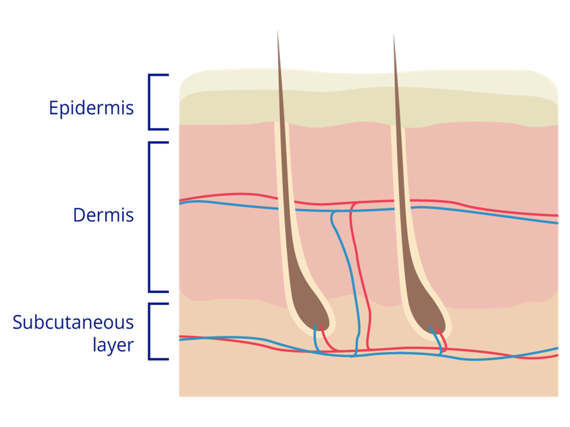 Skin clipart skin diagram. What is healthy the