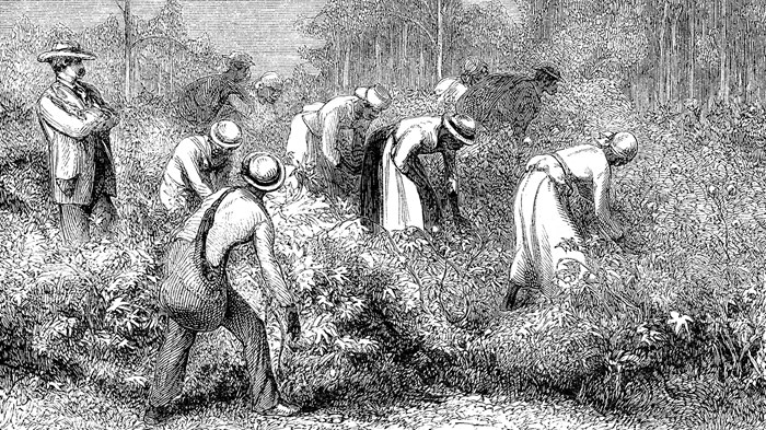 Why did so many. Slavery clipart church planting