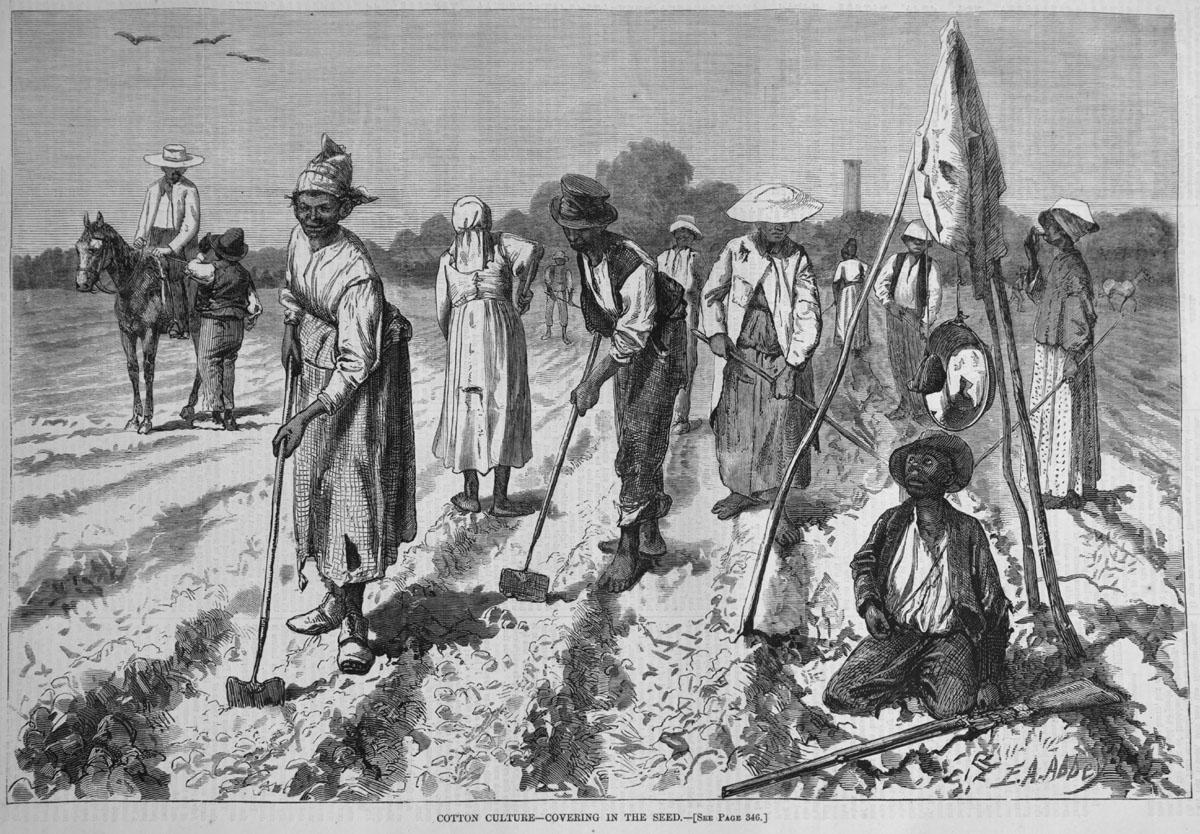 slavery clipart field work