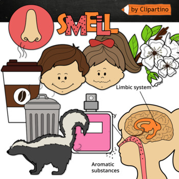 Five senses . Smell clipart nice smell