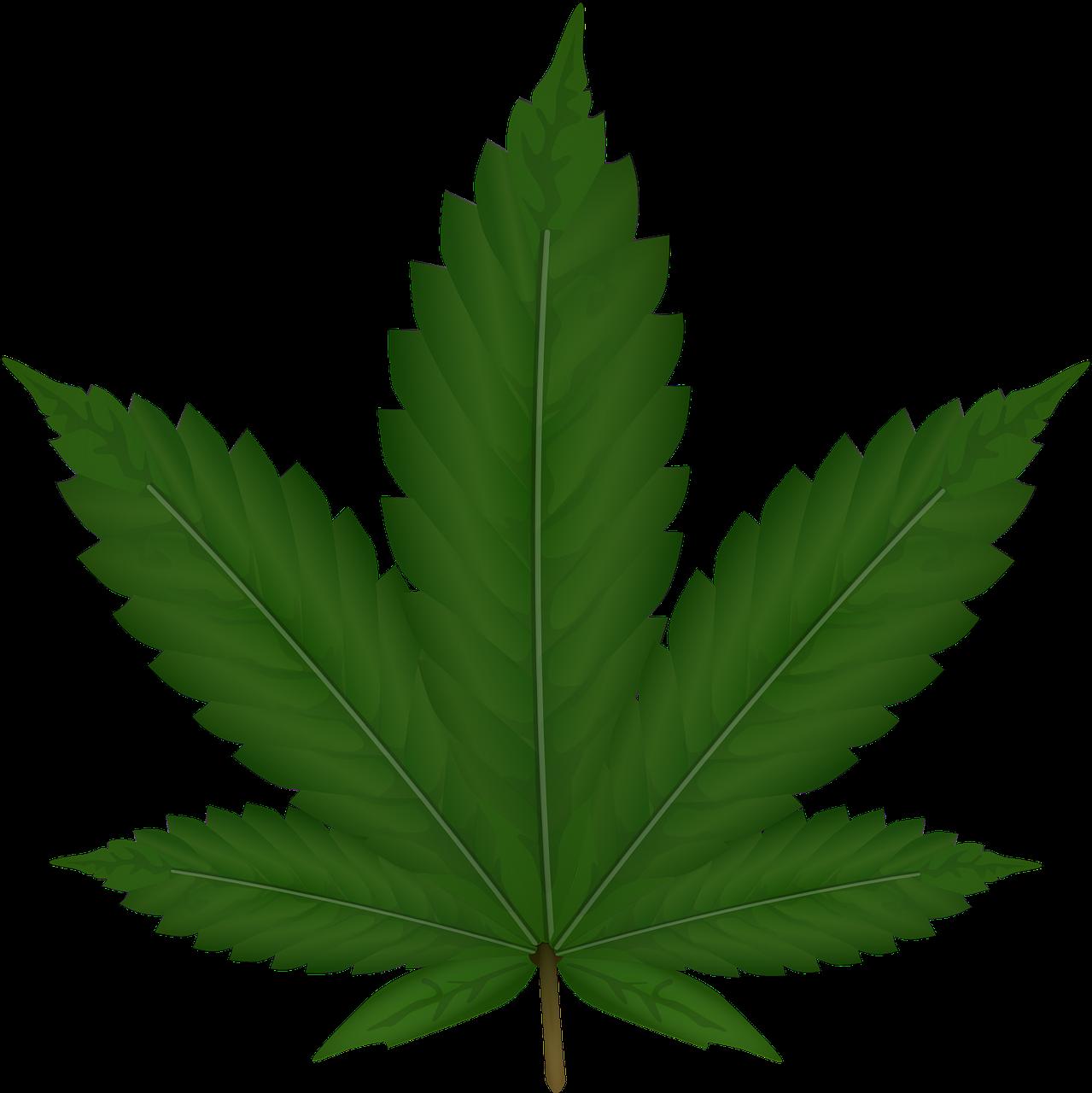 Smoke weed png. Plant image purepng free
