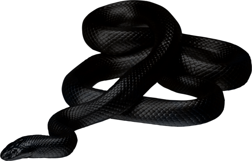 Black twirling png free. Snake clipart angry snake