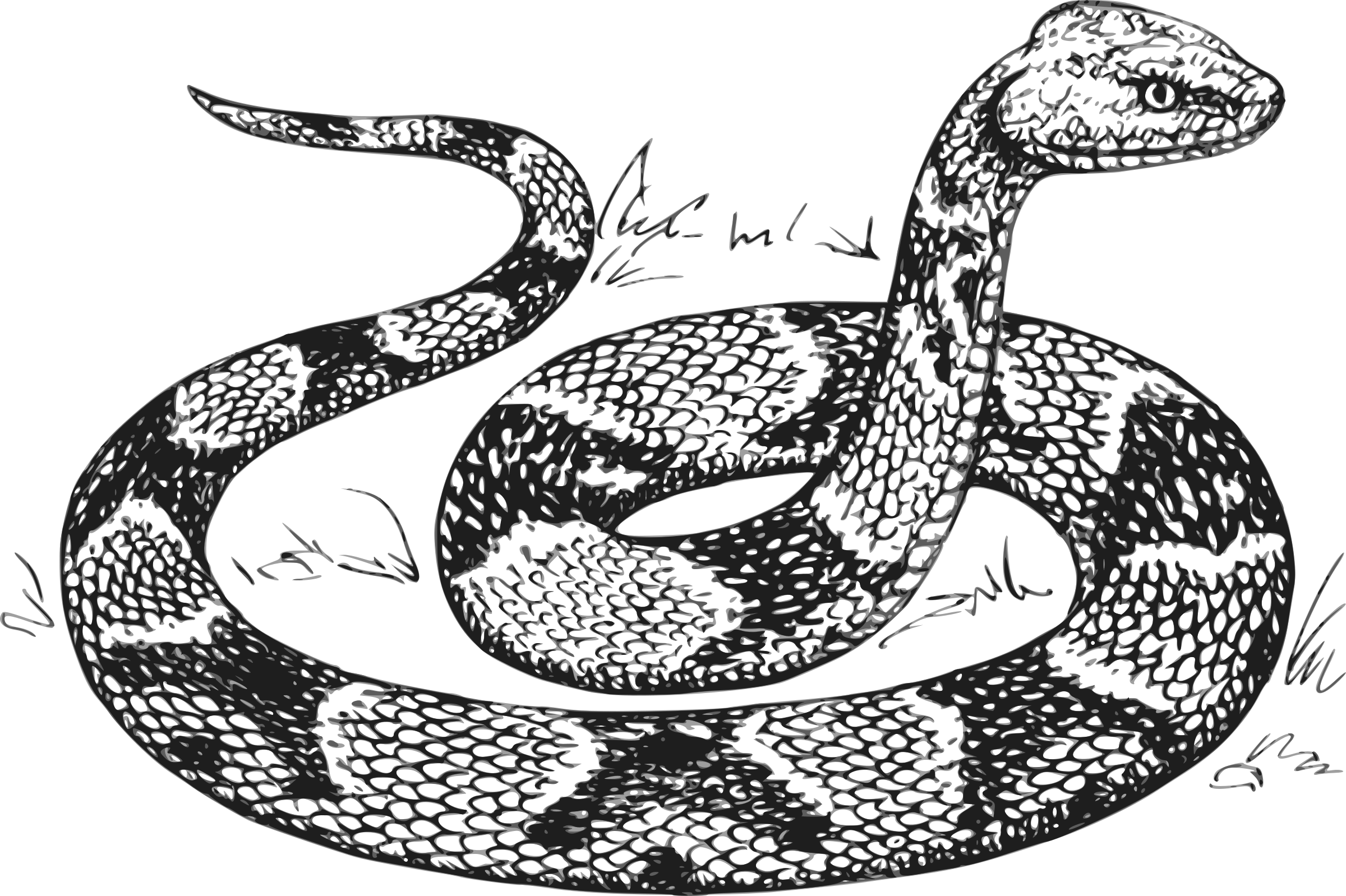 Snake clipart copperhead. Grayscale big image png