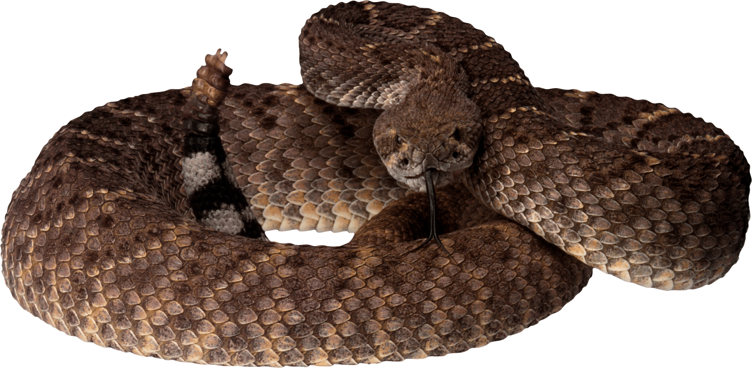 Snake clipart copperhead. Brown png image purepng