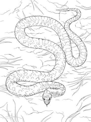 Snake clipart gopher snake. Coloring page free printable