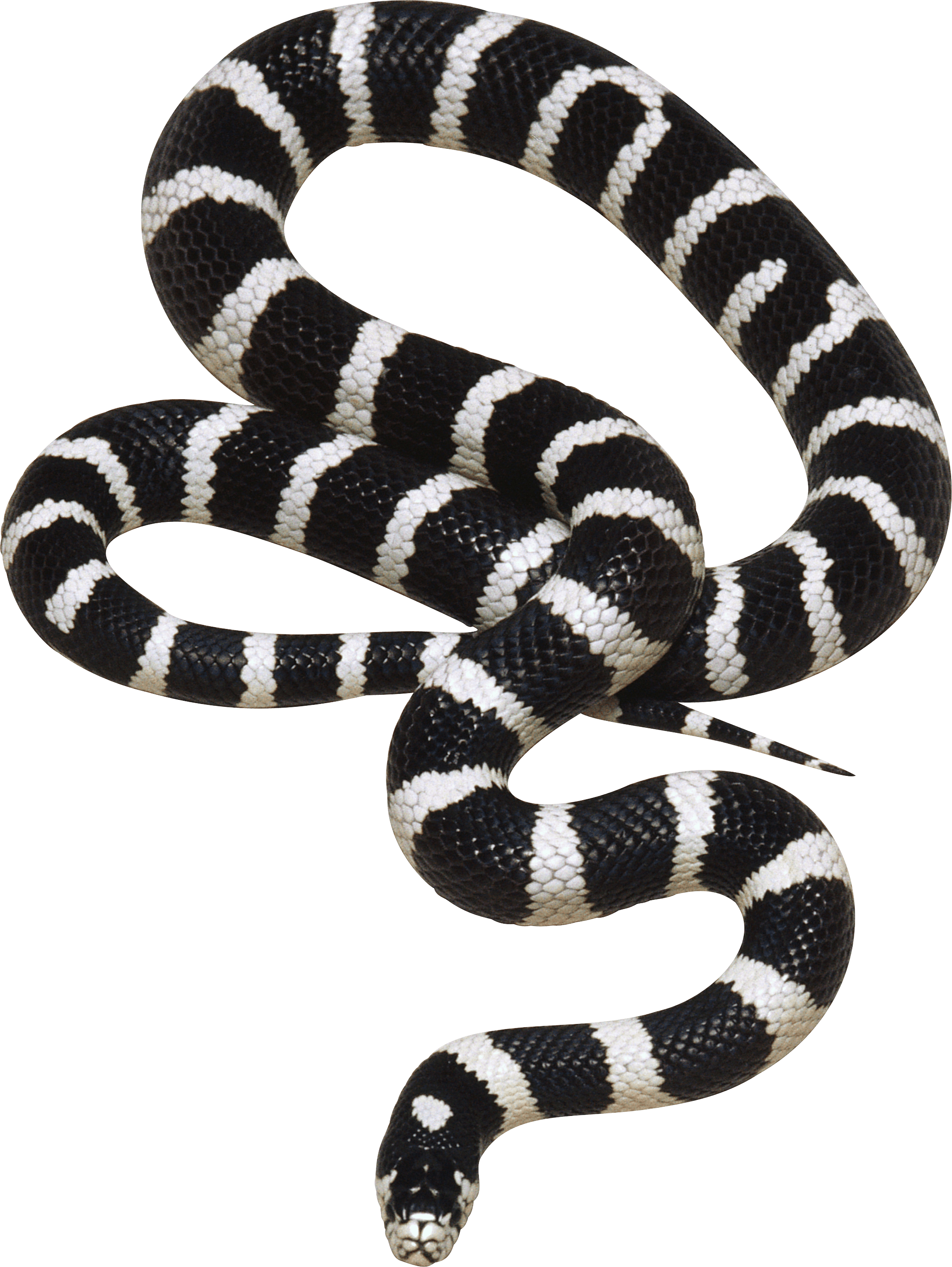 Snake clipart king snake. Black and white png