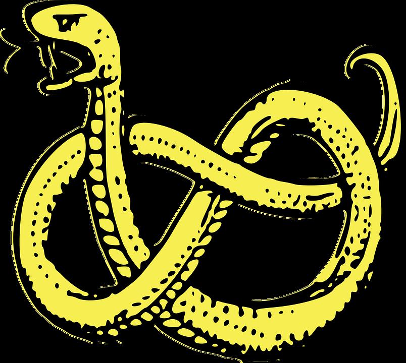 Snake clipart poison. Garter transparent background free
