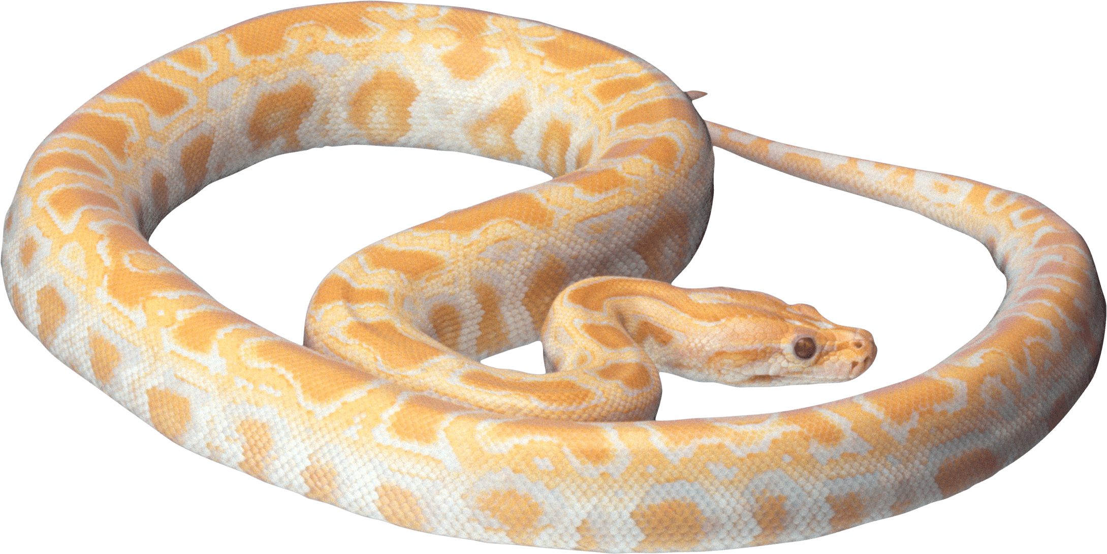 Png image purepng free. Snake clipart sea snake
