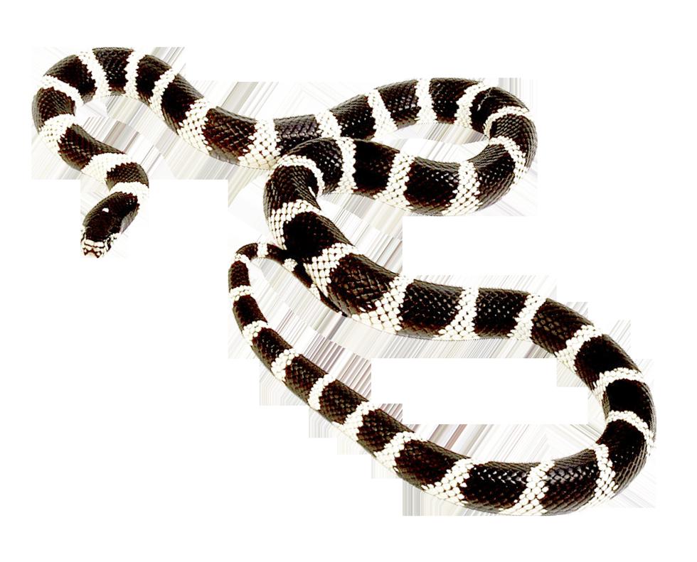 Png transparent image pngpix. Snake clipart sea snake
