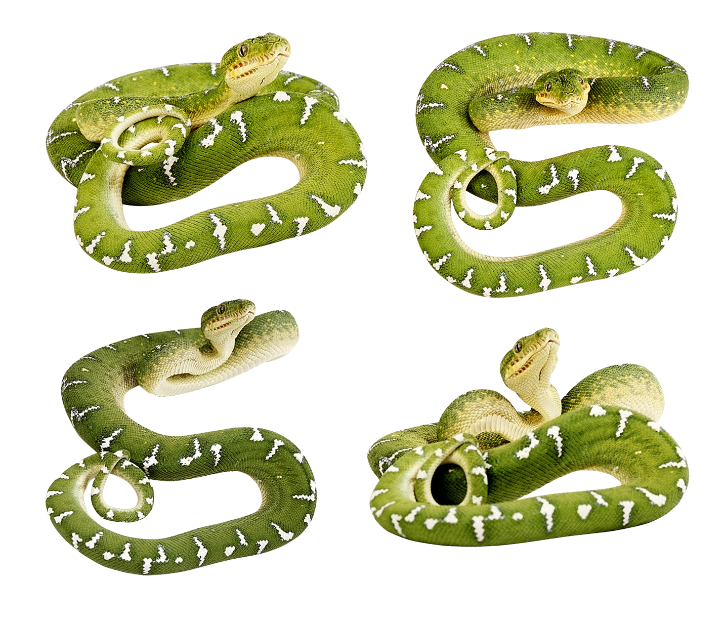 Snake clipart sea snake. Green snakes png image