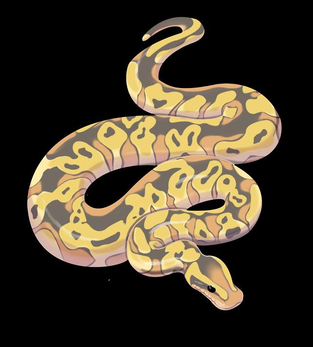 Snake clipart serpent. Ball python free on