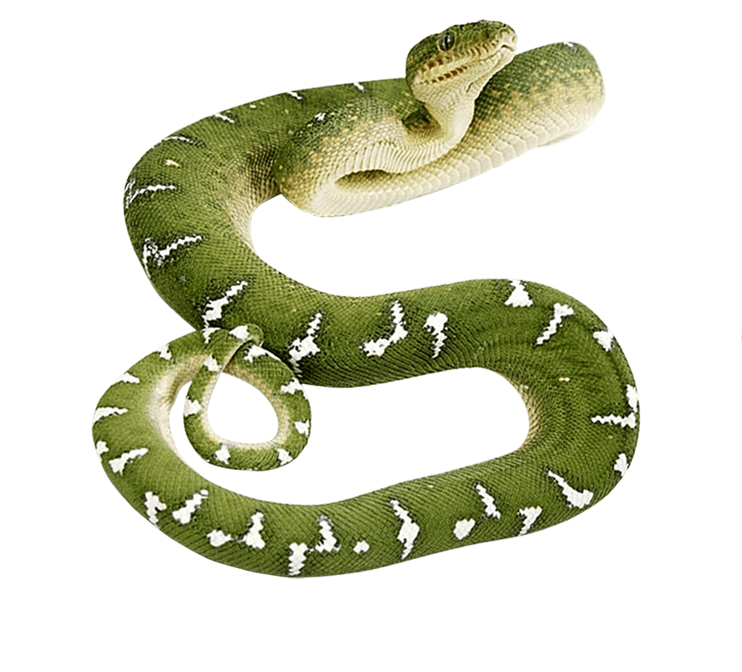 Snake clipart tail. Tree rat free on