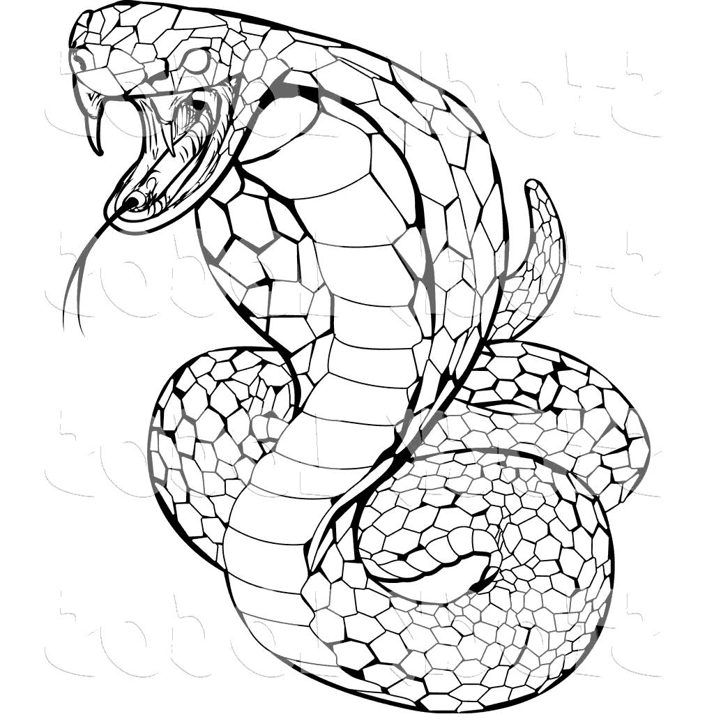 Snake clipart viper snake. Anaconda awesome for adults