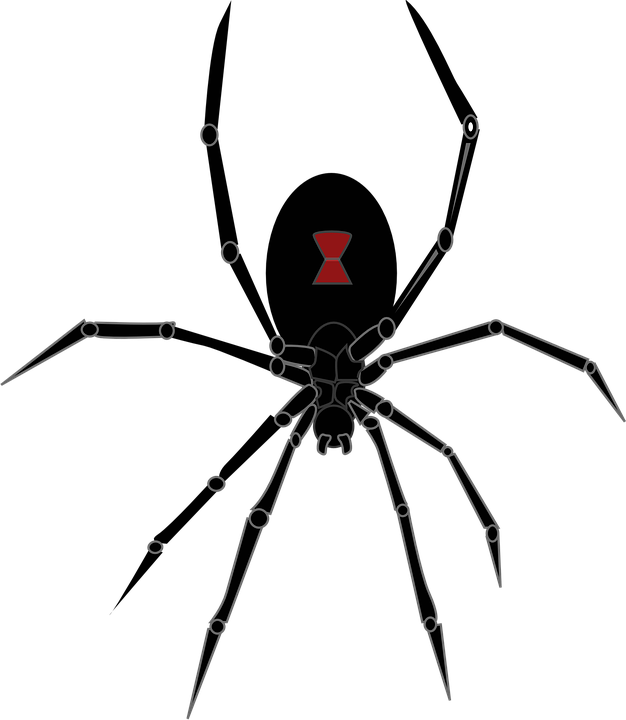 Spider clipart illustration. Illustrations shop of library