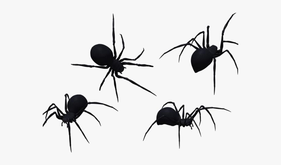 Spider clipart invertebrate animal. D black png free