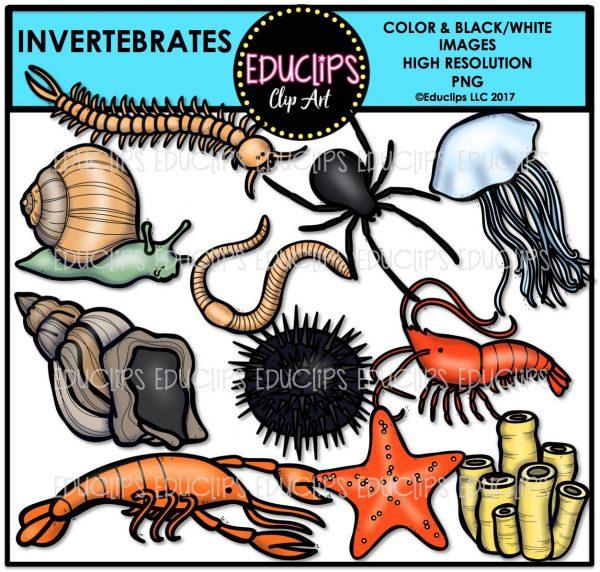 Invertebrates clip art bundle. Spider clipart invertebrate animal