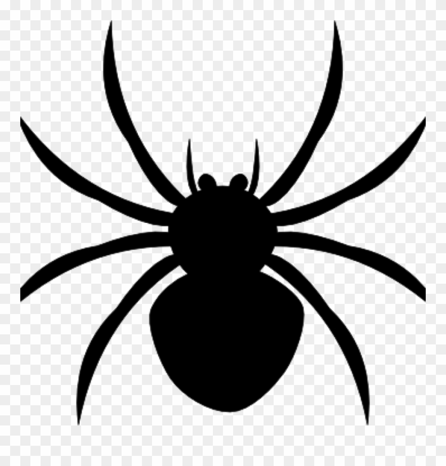 For free download images. Spider clipart invertebrate animal