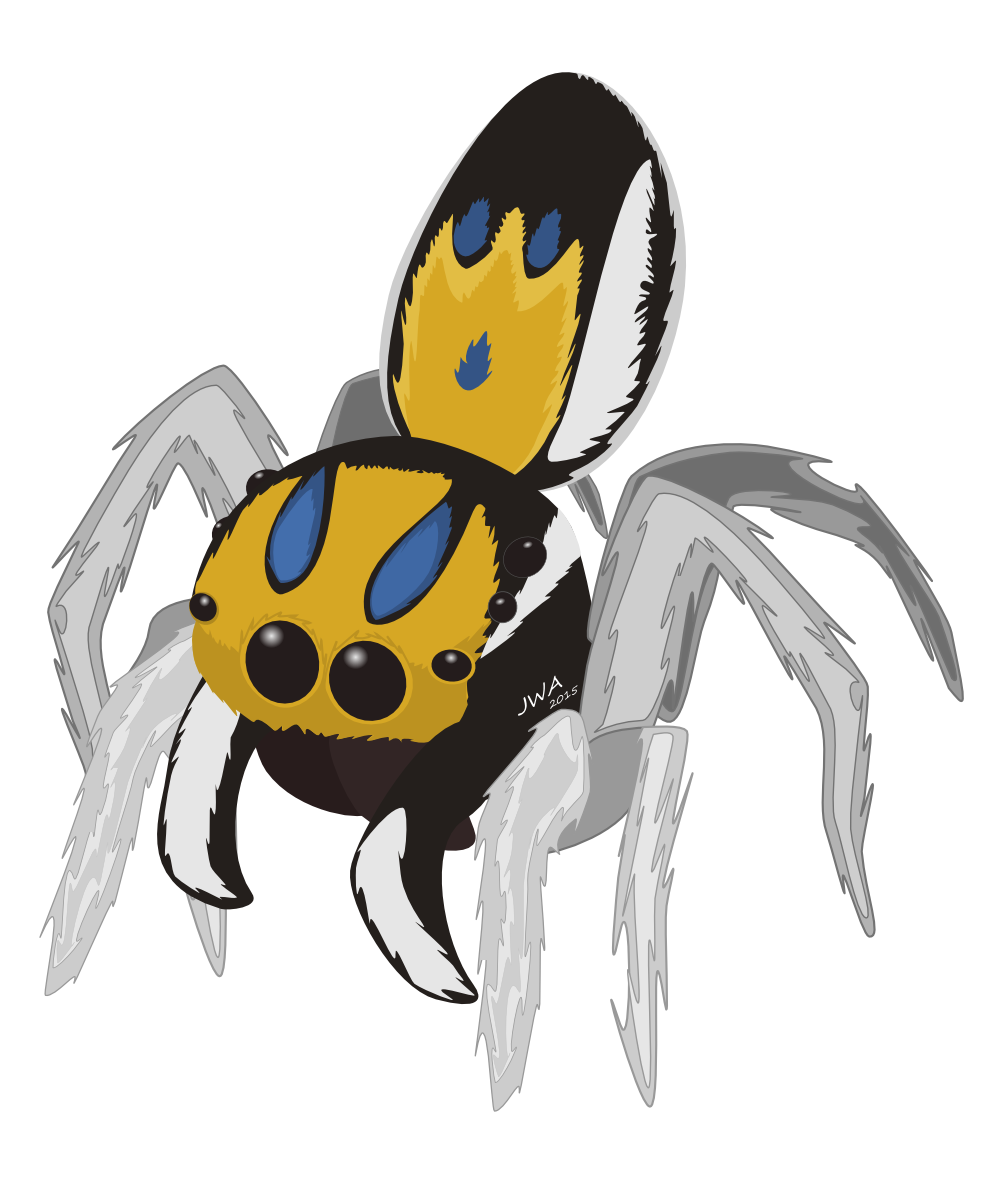 Peacock spiders jared wilson. Spider clipart jumping spider