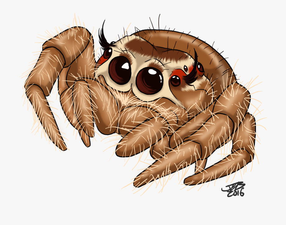 Graphic royalty free download. Spider clipart jumping spider