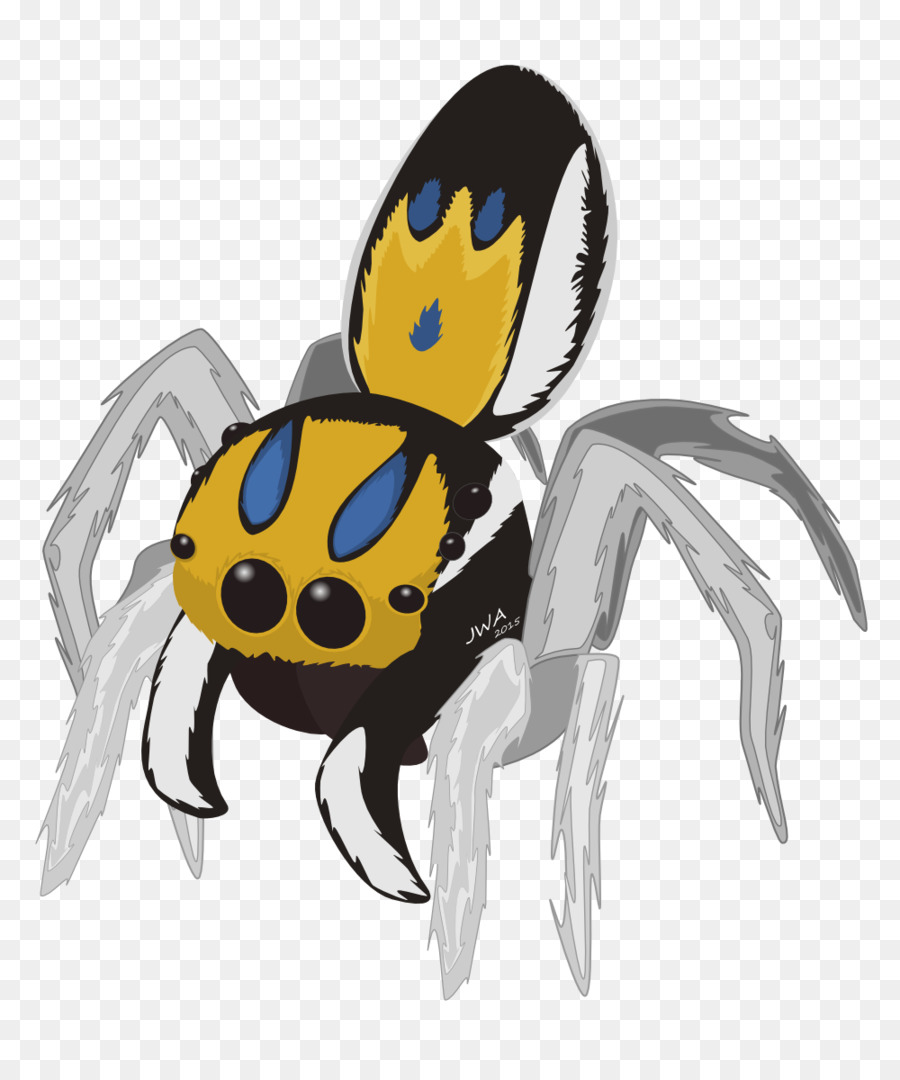 Spiders cartoon png download. Spider clipart jumping spider