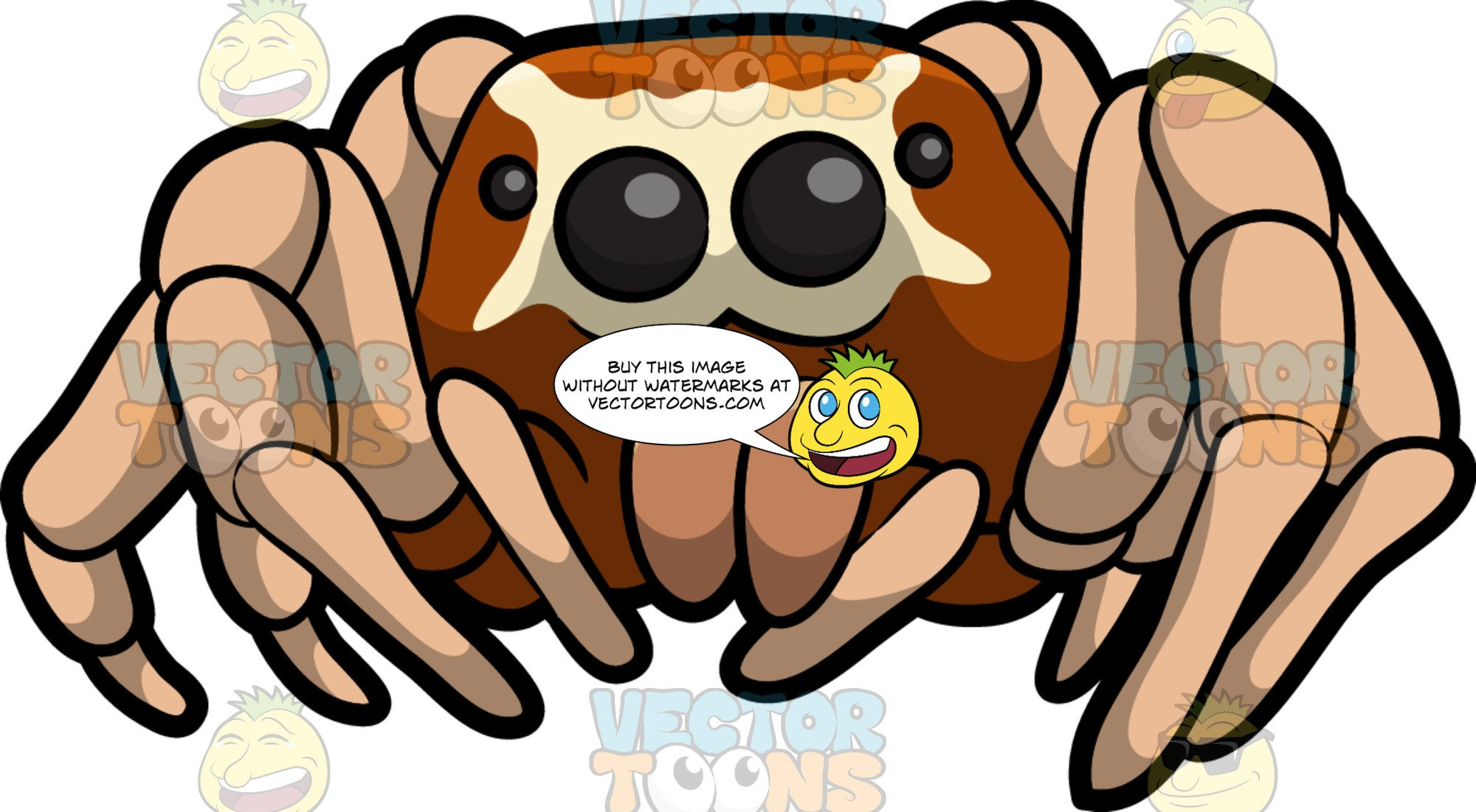 Spider clipart jumping spider. A