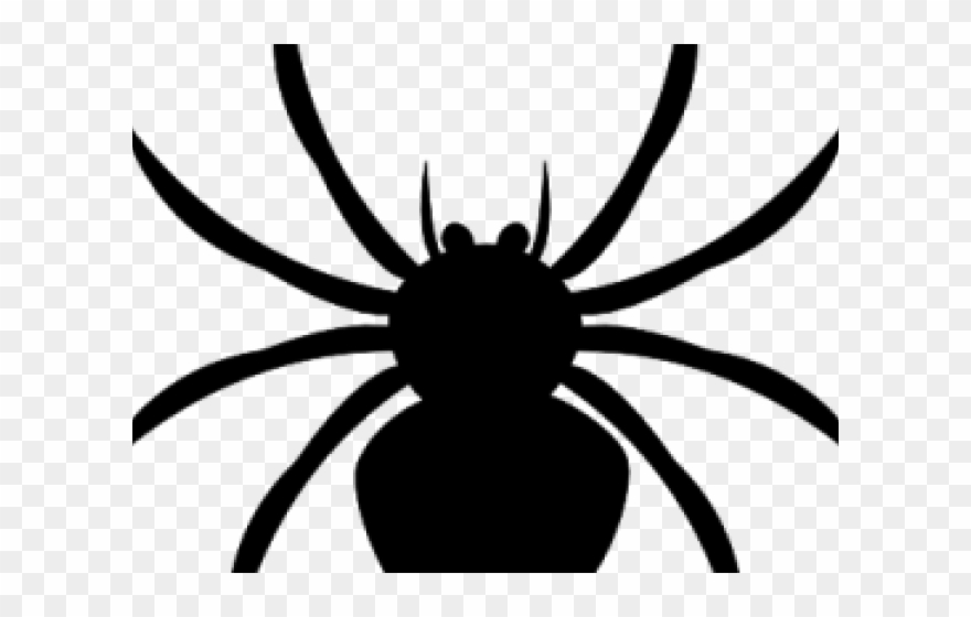 Black png . Spider clipart water spider