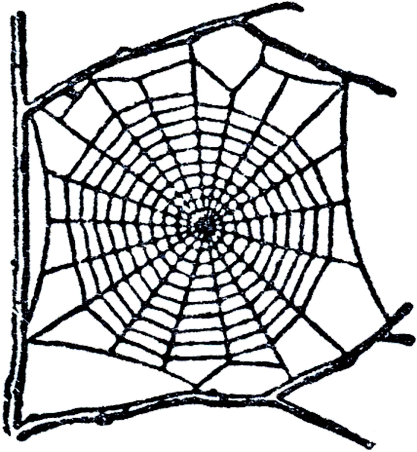 Free spider web clip. Spiderweb clipart