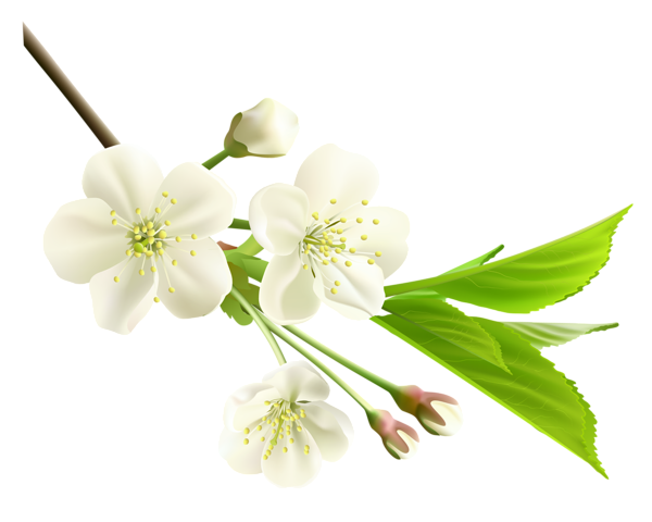Spring flower png. Photos mart