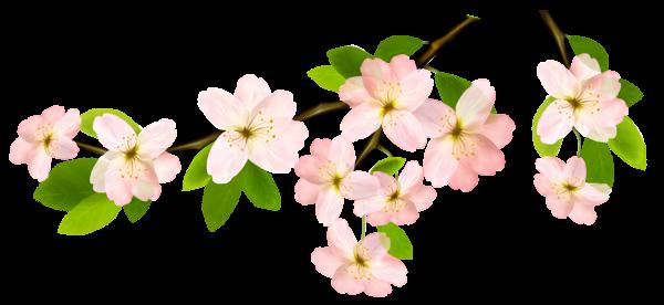 . Spring flower png