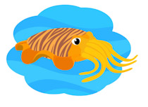 Search Results for squid mollusk - Clip Art - Pictures ...