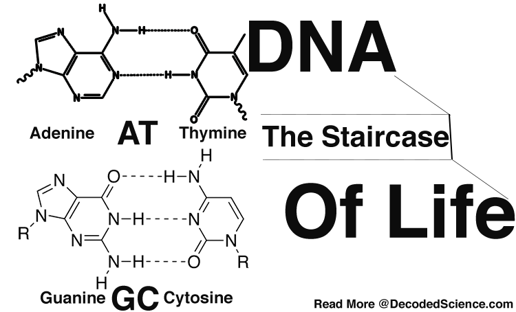 Chemistry and dna the. Staircase clipart banister