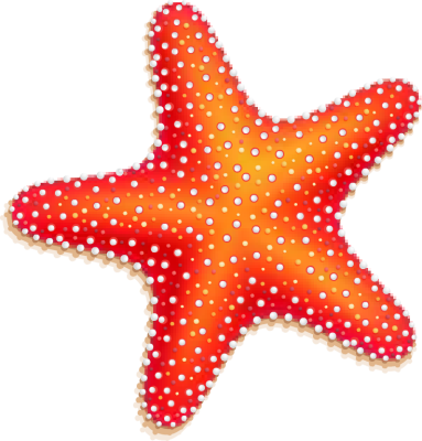 3 clipart starfish. Colorful seashell png ocean