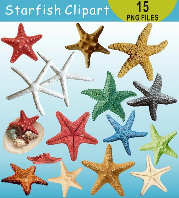 Clip art under the. Starfish clipart beach item