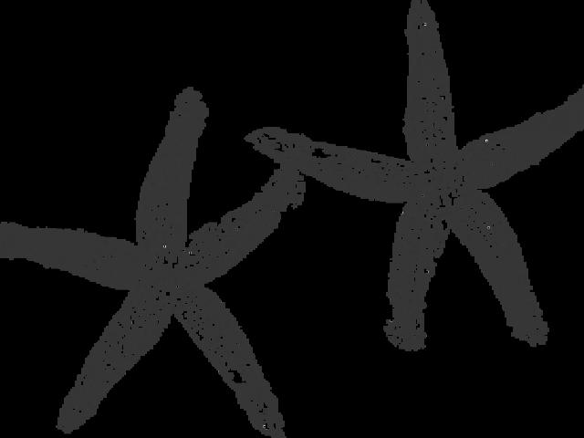 Cliparts x carwad net. Starfish clipart grey