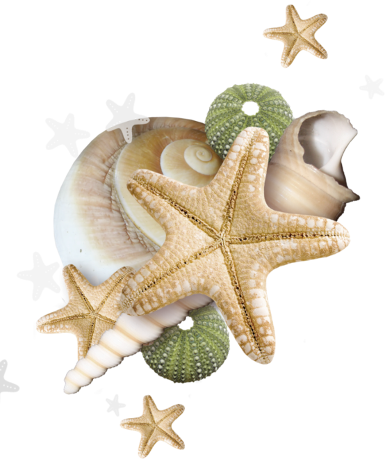 Starfish clipart ornate. Evasion pinterest