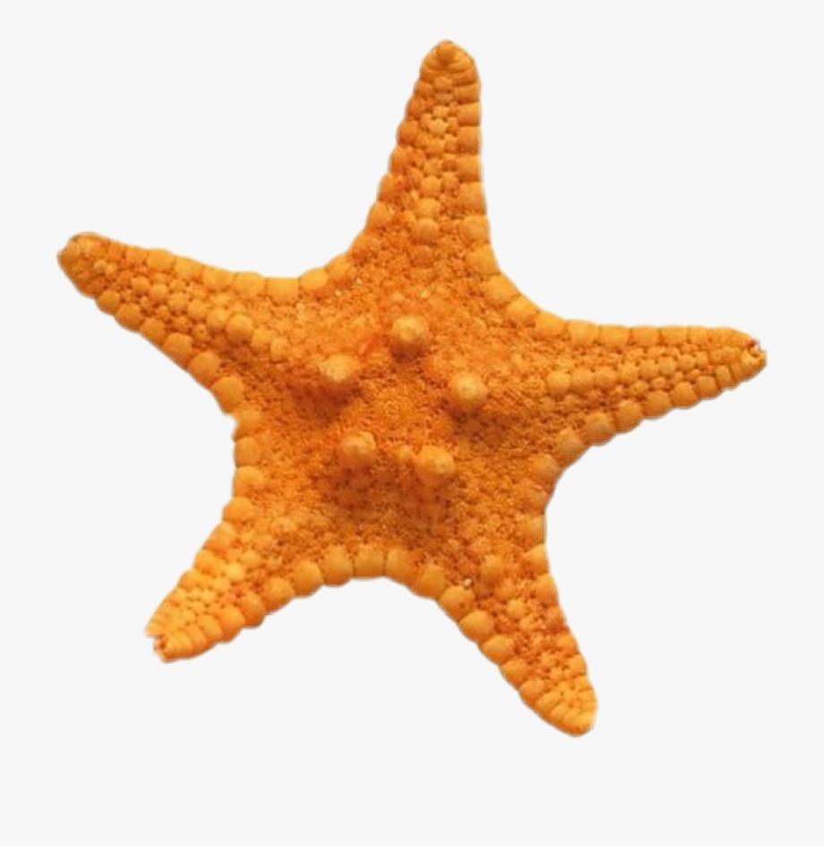 Starfish clipart rainbow fish, Starfish rainbow fish ...