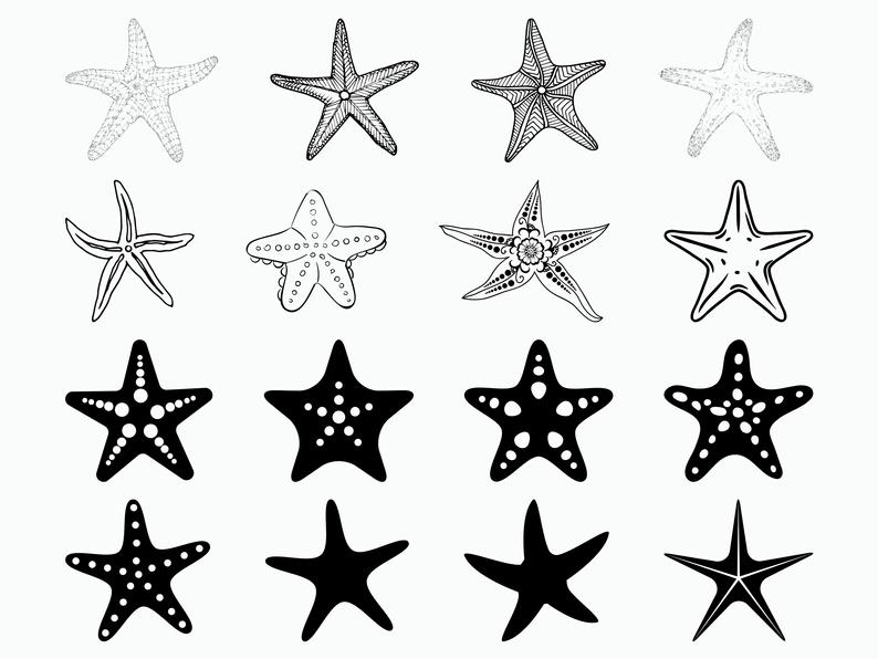 Starfish Clipart Svg Starfish Svg Transparent Free For Download On Webstockreview 2020