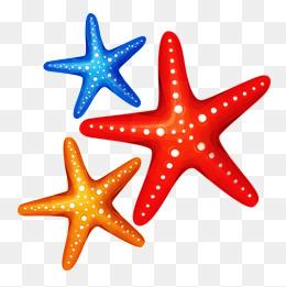 Starfish clipart three. Png vectors psd and