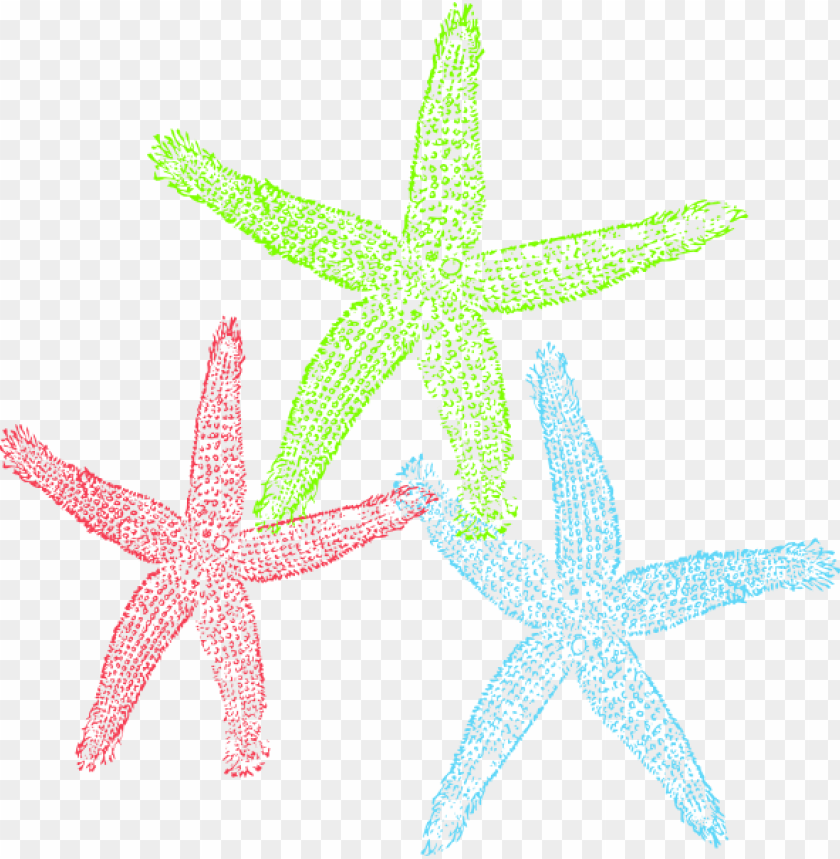 Free set of colorful. Starfish clipart three