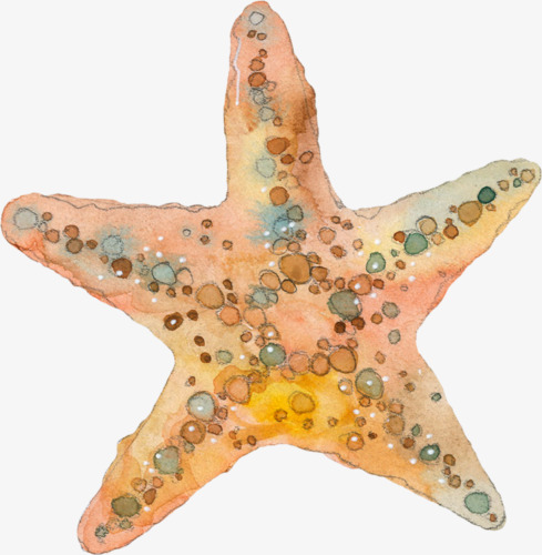 Starfish clipart watercolor. Png images