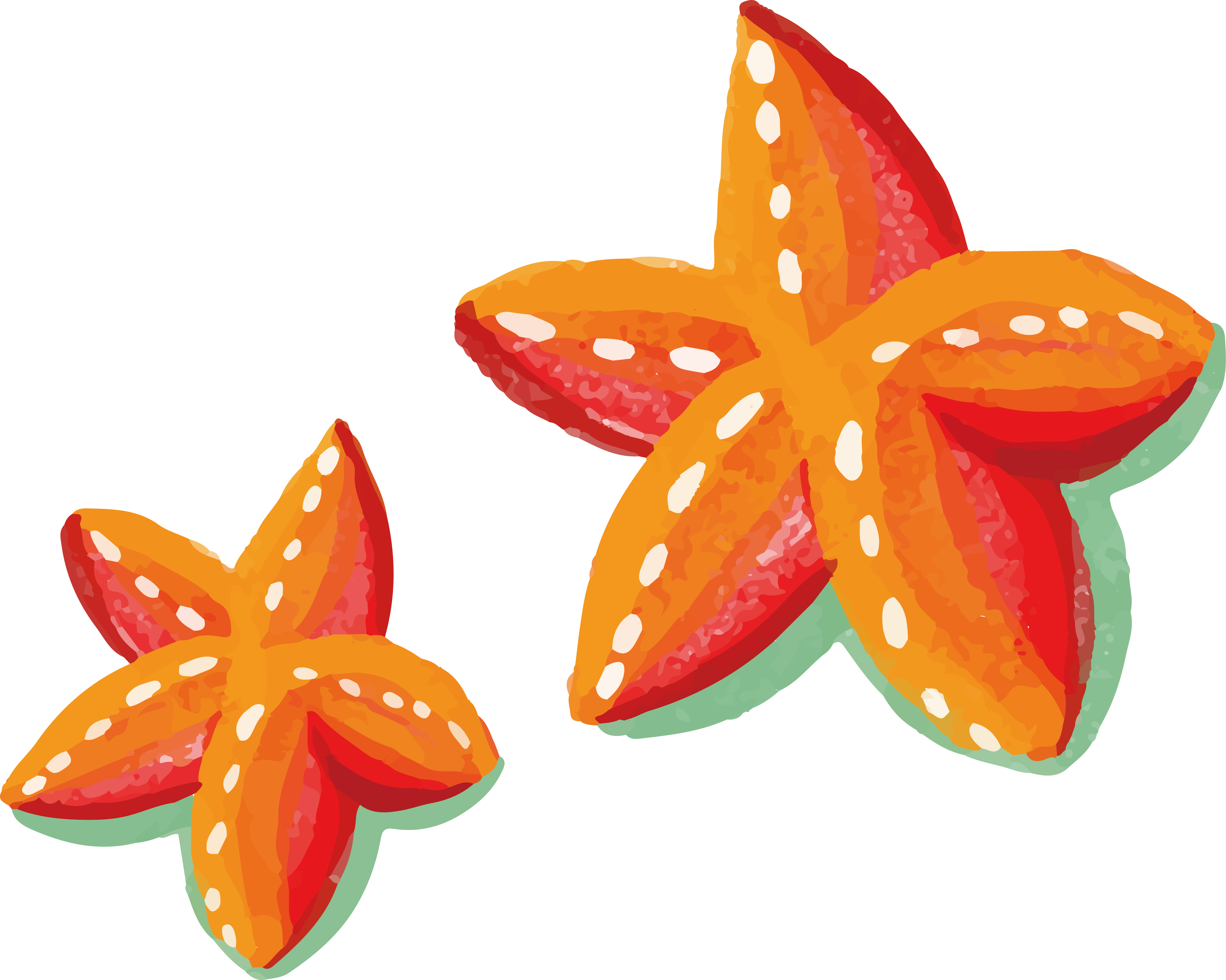 Starfish clipart watercolor. Painting orange painted transprent