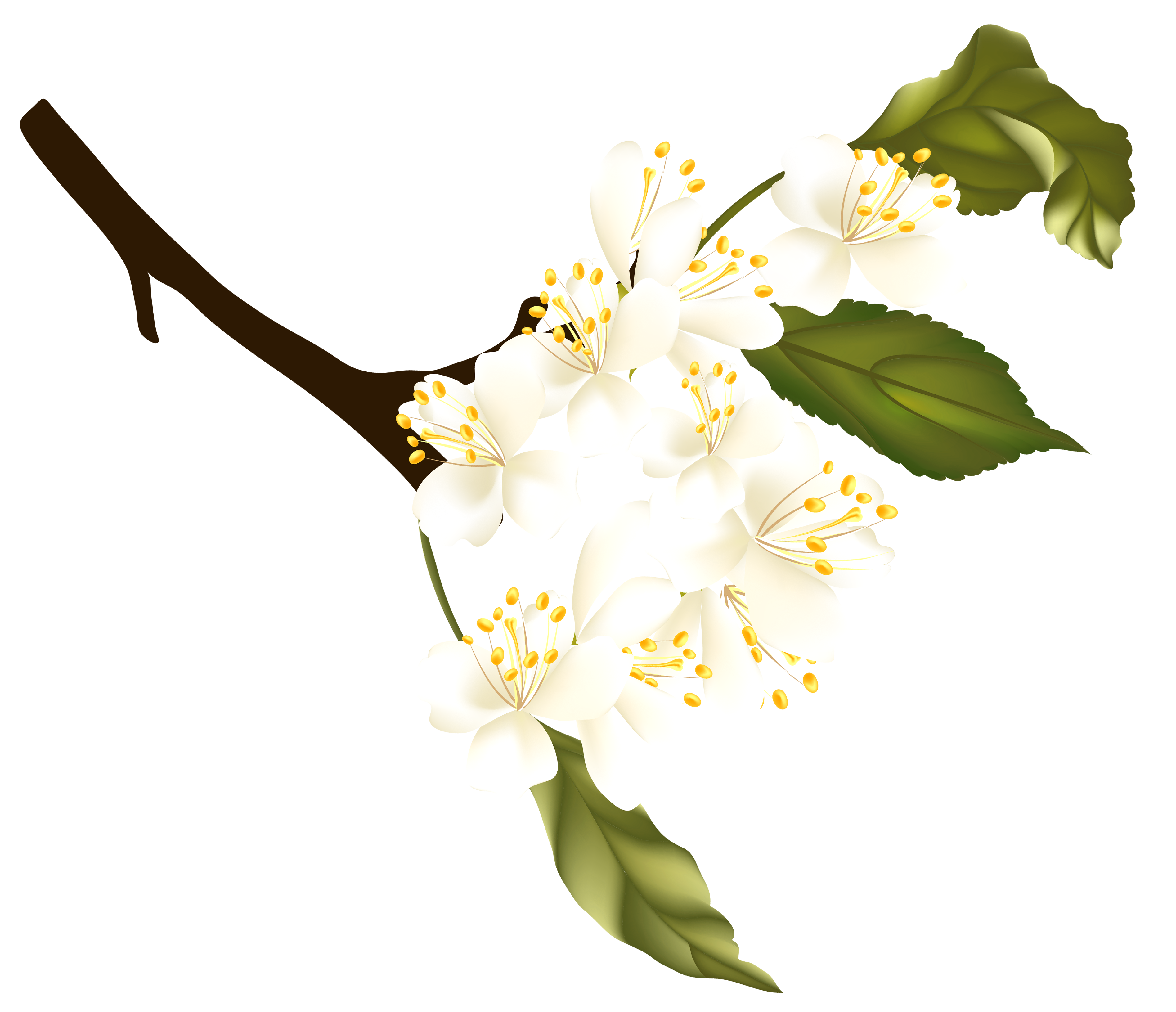 Spring element png gallery. Stick clipart branch