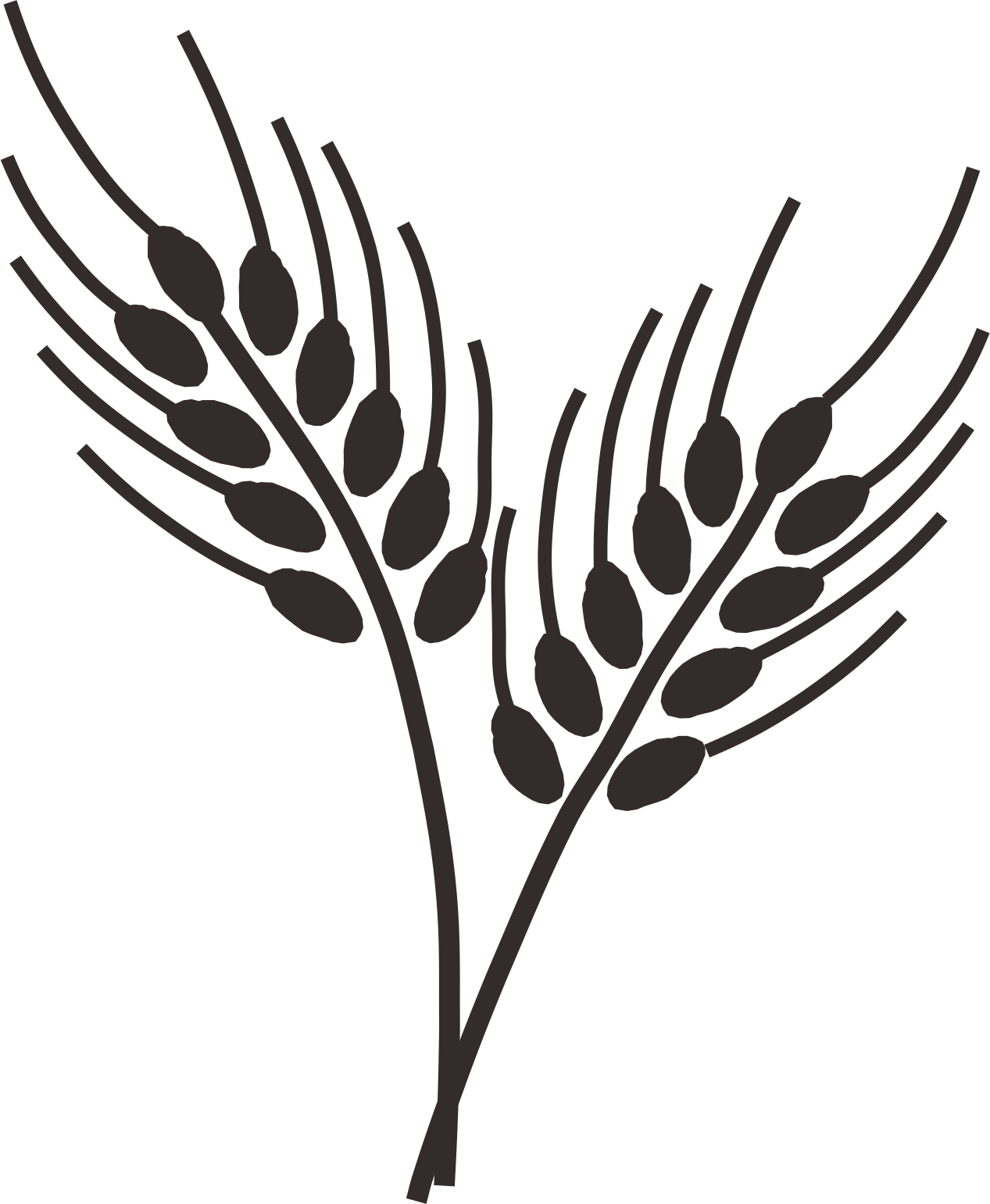 Wheat clipart branch. Common drawing cereal wheatgrass