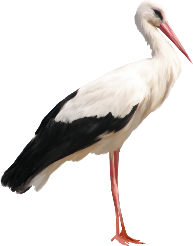 Png images free download. Stork clipart heron